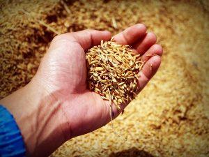 Grain Dust Can Be Dangerous